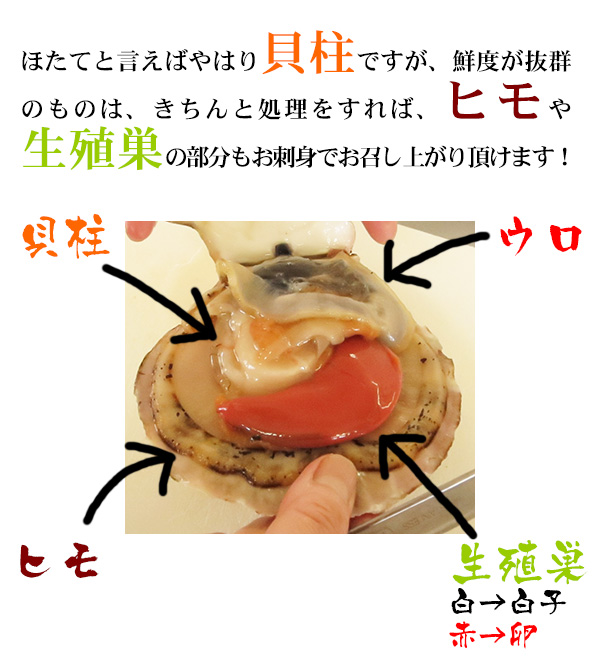 ほたてと言えばやはり貝柱ですが、鮮度が抜群のものは、きちんと処理をすれば、ヒモや生殖巣の部分もお刺身でお召し上がり頂けます!